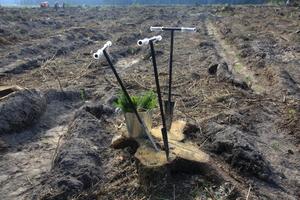 Лопата лесопосадочная ЛПЛ-5,5 (Меч Колесова)